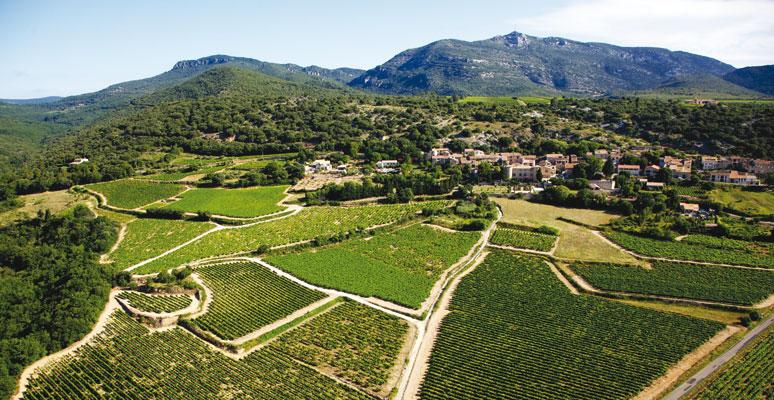 Herault viticole